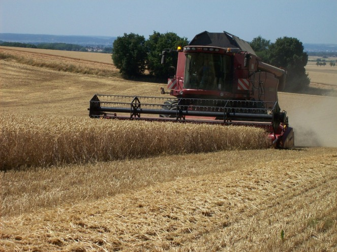 harvest-1738975_1280